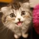 「JPEG Optimizer」とか「JPEG mini」ってWordPress的には無意味かも。